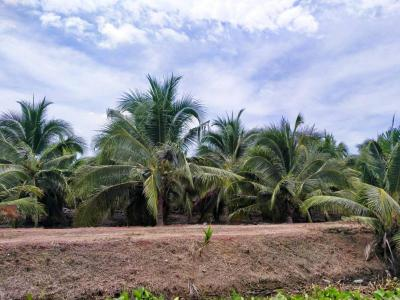 ที่ดิน 650000 ราชบุรี โพธาราม ดอนทราย